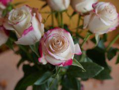 15th Anniversary Rose